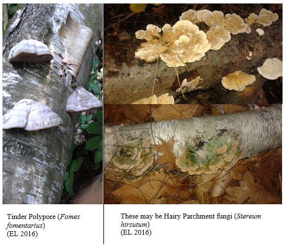 Mushroom 14 + 15
