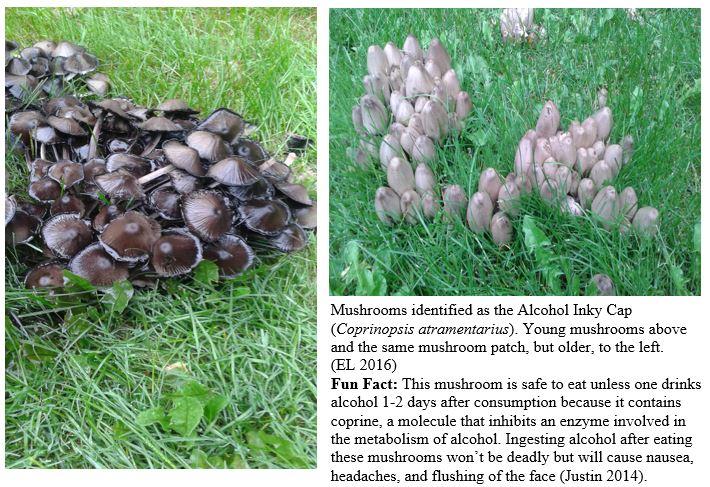 Mushroom 3 + 4