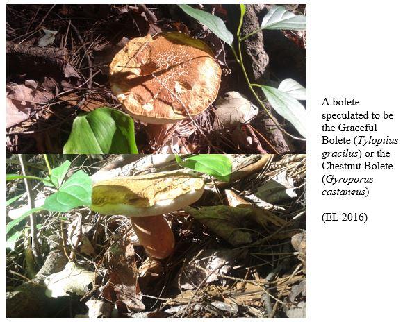 Mushroom 5 + 6